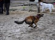 Psie fikołki 11 maja 2014